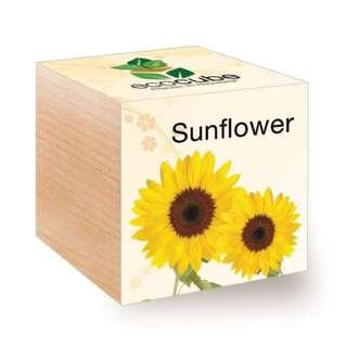 🚚 Ecocube Sunflower Home / Office Cube Plant Set