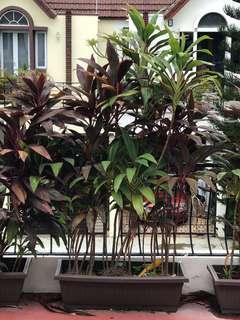 Tropical plants in planter box 3