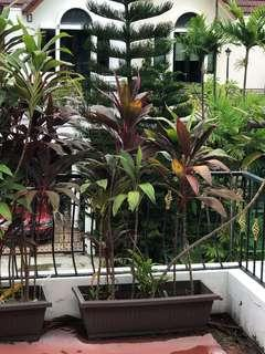 Tropical plants in planter box 2