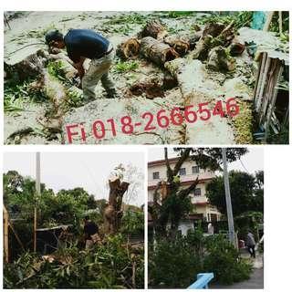 Servis Potong Pokok / cutting trees