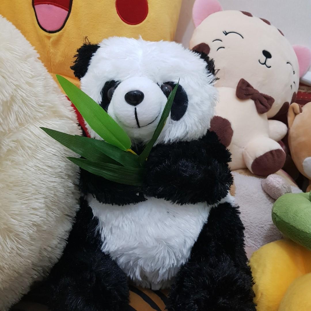 Gambar Beruang Lucu Wwwtollebildcom