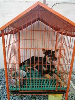 Dog Cage for Sale with Half breed Dog
