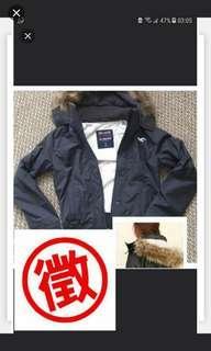 徵收 Hollister All Weather Jacket