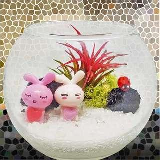 [FREE DELIVERY] Live Air Plant in Glass Bowl Terrarium (019-GD)