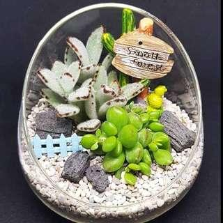 [FREE DELIVERY] Succulents in Glass Vase Terrarium (029-GD)