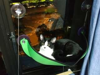 Cat window perch (used once)