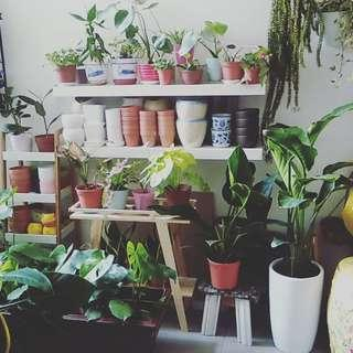 Houseplants for sale
