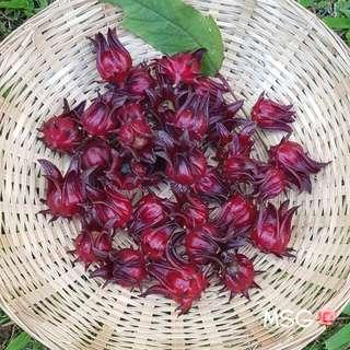 (NEW) SMALL VARIETY OF ROSELLE PLANT SEEDS (Pack of 10 seeds)