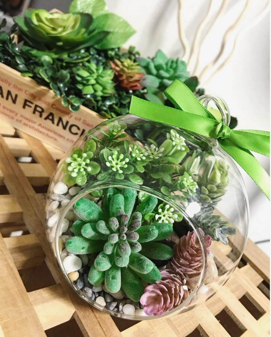 Affordable Lovely Succulents Glass Terrarium Planters Gardening