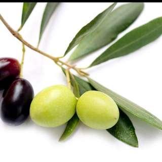 Mini Bonsai Olive Tree Seeds Olea Europaea Mix Color
