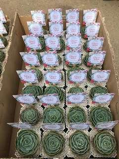 Succulent Giveaways