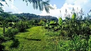 200Hectares Lot For Sale!
