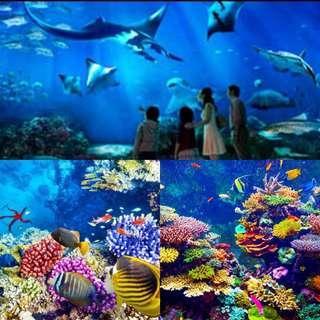 Sea Aquarium Sea Aquarium Sea Aquarium