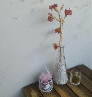 Rent Rental: Dried Pink Flower Pebbles Glass Vase Table Deco