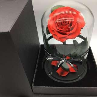 🚚 Preserved Ecuadorian Roses in Glass Dome (Deluxe)