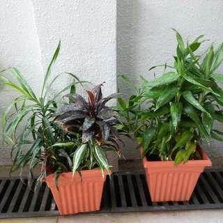 2 Pots Of Mixed Plants