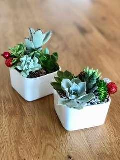 Succulent Christmas Gifts - white ceramic gems