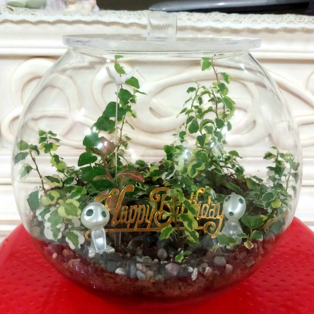 Alien E T Terrarium 20cm Closed Type With Cover Established For