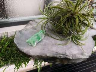 Jadeite Cicada Pendant 翡翠蝉吊坠