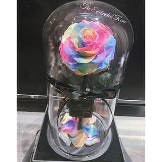 Official Enchanted Rose~Highest Quality Preserved Roses, Premium Large Bloom Directly imported from Japan