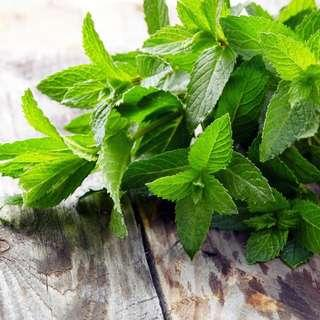 🚚 Peppermint (Mentha Piperitta) Heral Heirloom, 160-180 Seeds