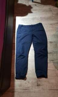 Zara Basic Blue pants