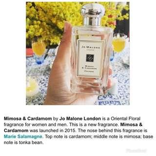 Mimosa Cardamom 100ml