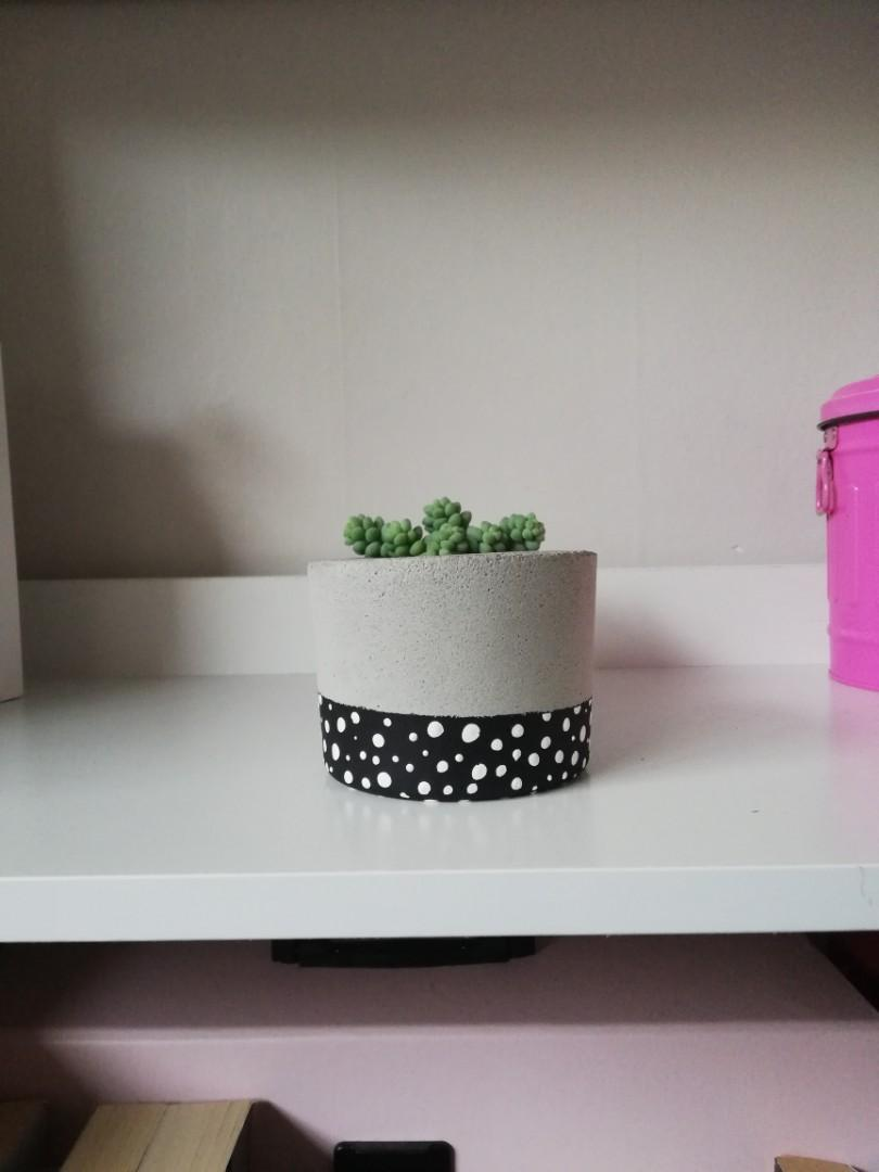 Small Concrete plant pot