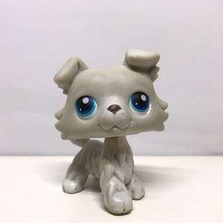 LPS collie