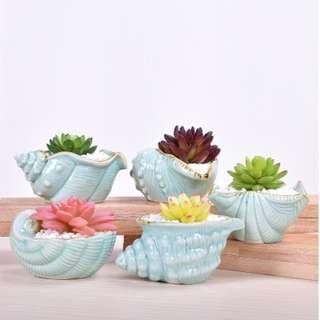 Seashell Planter small Pot for Cactus or Succulents