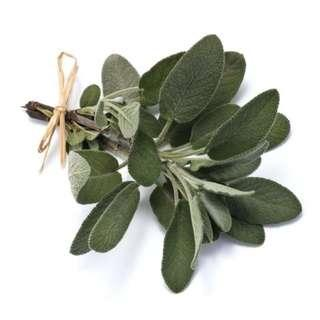 🚚 Sage (Salvia officinalis L.) Herbal Plant Seeds, Aromatic Culinary Herb