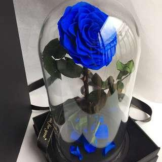 🚚 Premium Preserved Ecuadorian Roses in Big Glass Dome