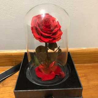 Beauty & The Beast Eternity Flower Glass Dome Display