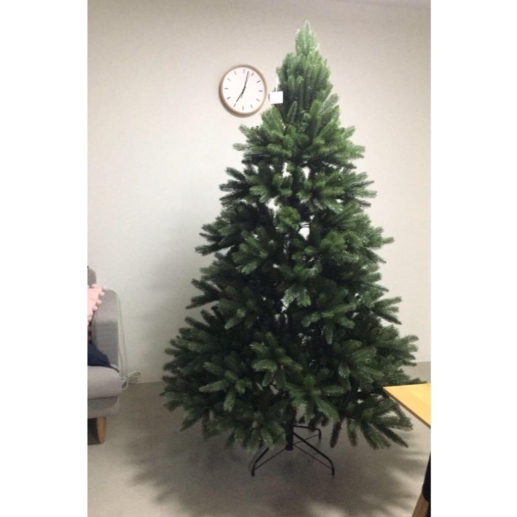 Noble Fir Christmas Tree.Noble Fir Christmas Tree 7 Feet Tall