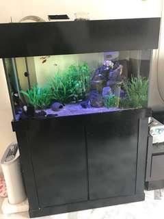 Aquarium to let go
