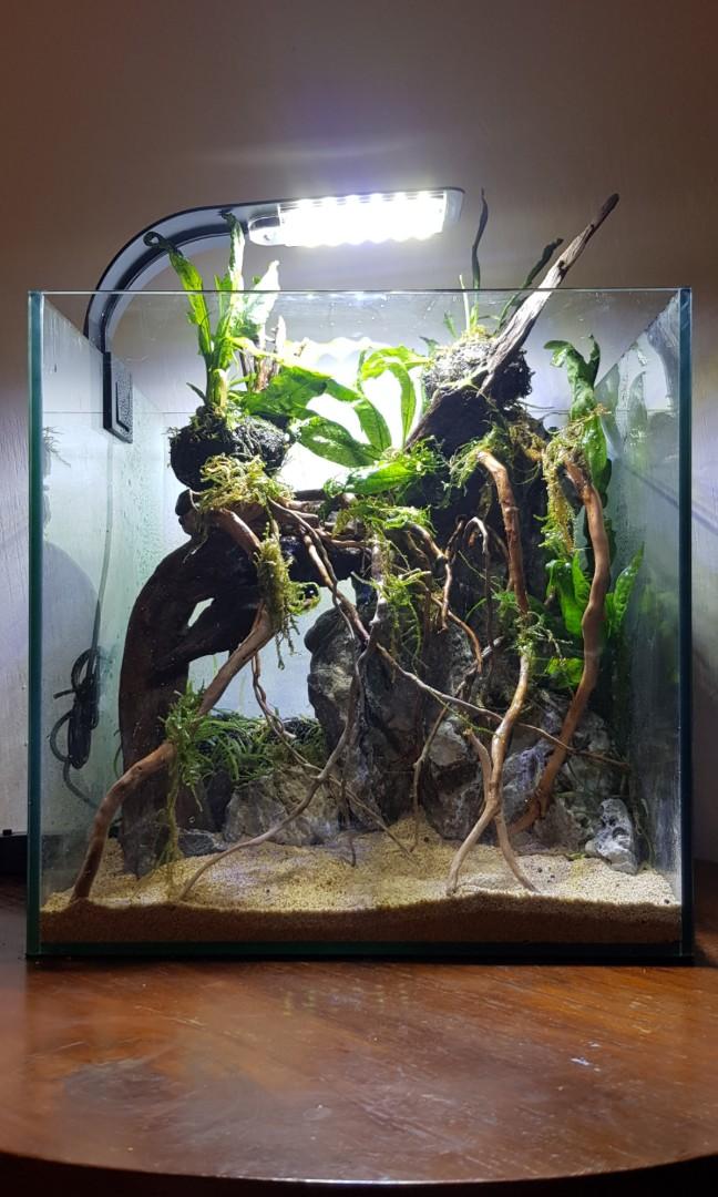 amazon theme aquascape fish shrimp tank pet supplies for fish