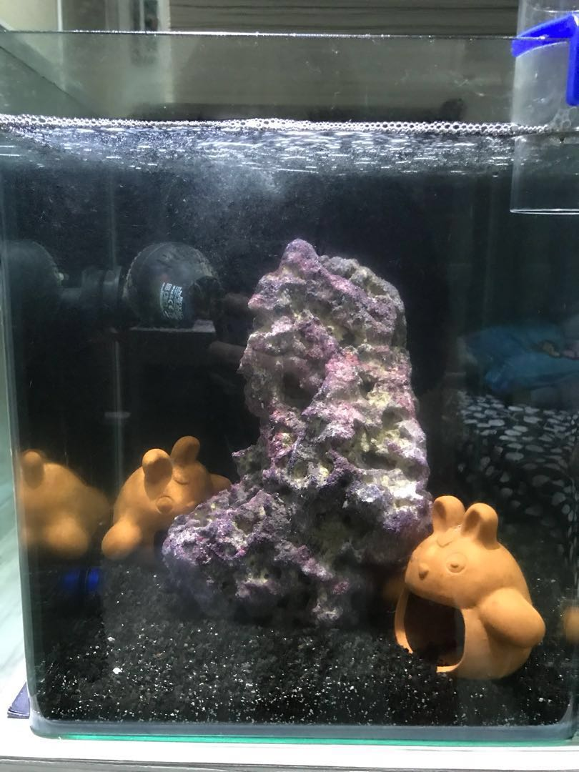 Stable marine reef tank for sales price reduce