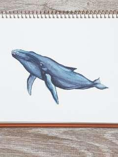 Watercolour Highlights - Humpback Whale