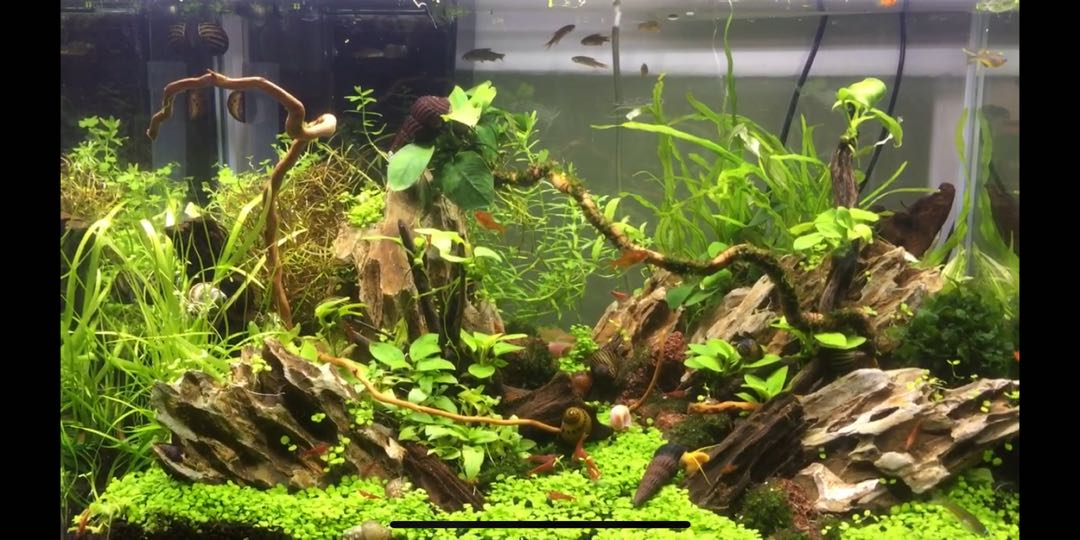 Well Aquascaping Fish Tank With Full Set Of Equipment Pet Supplies