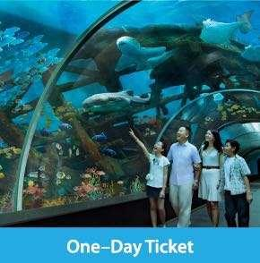 Sea Aquarium Adult ticket(only 1)
