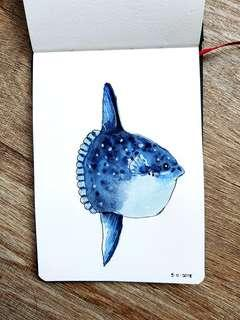 Watercolour Highlights - Mola Mola