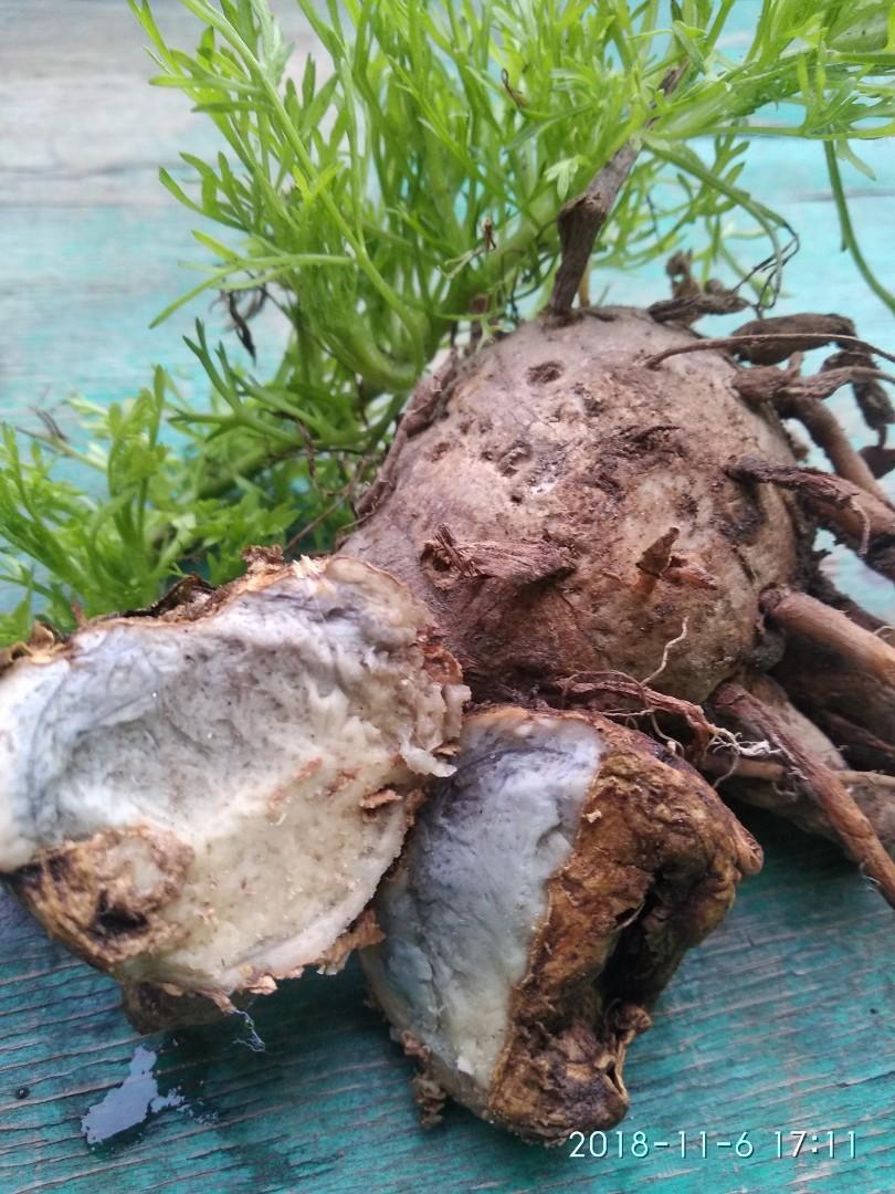 Tanaman Herbal Temu Ireng Asli Kesehatan Kecantikan Kulit Sabun Tubuh Di Carousell