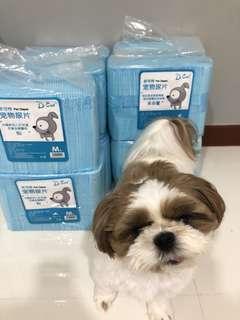 Dog | Cat | Pets Pee Pad