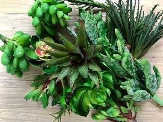 Assorted faux succulents (15 succulents in 1 bundle