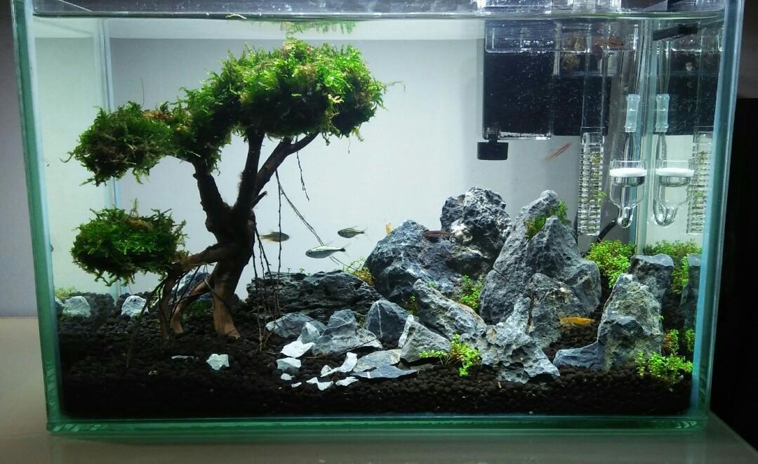 Nano Fish Tank (aquascape), Pet Supplies, For Fish, Fish ...