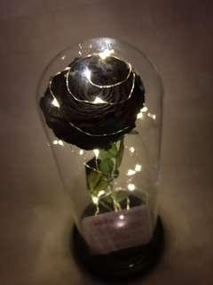 Enhanted Rose - 12 inches tall dome