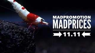 Madshrimp Promotion