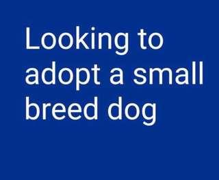 Looking to Adopt a Small Dog (HDB approved)