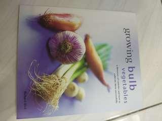 Growing bulb vegetable