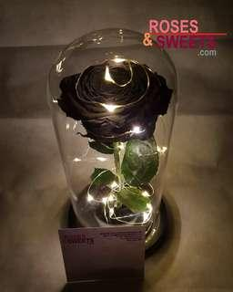 Enchanted Rose - 9 inches dome